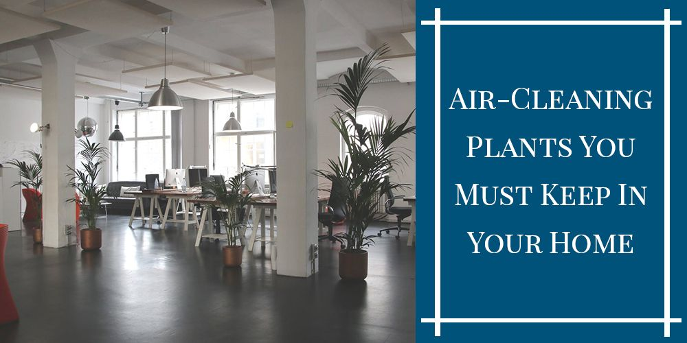 8 Air-Cleaning Plants You Must Keep In Your Home